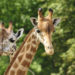 Take A Road Trip To The Lincoln Park Zoo In Chicago, IL